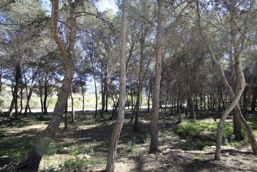 Plot for sale in Moraira, walking distance...